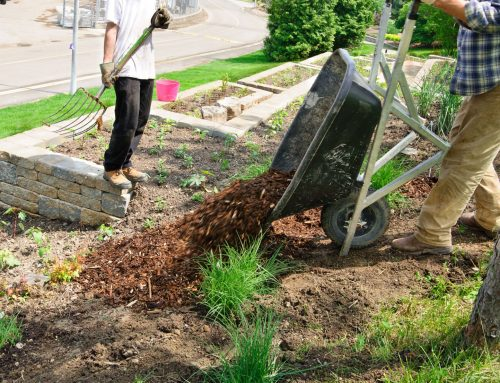4 Quick Tips to Landscaping for First-Time Homeowners